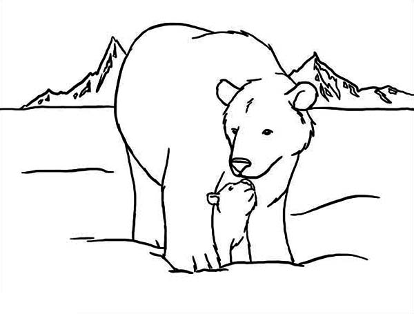 600x455 Coloring Pages Draw A Polar Bear Arctic Animals Polar Throughout