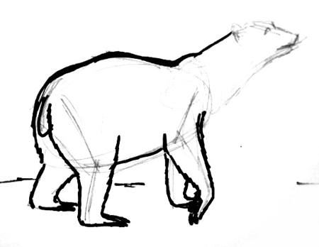 450x348 How To Draw A Polar Bear