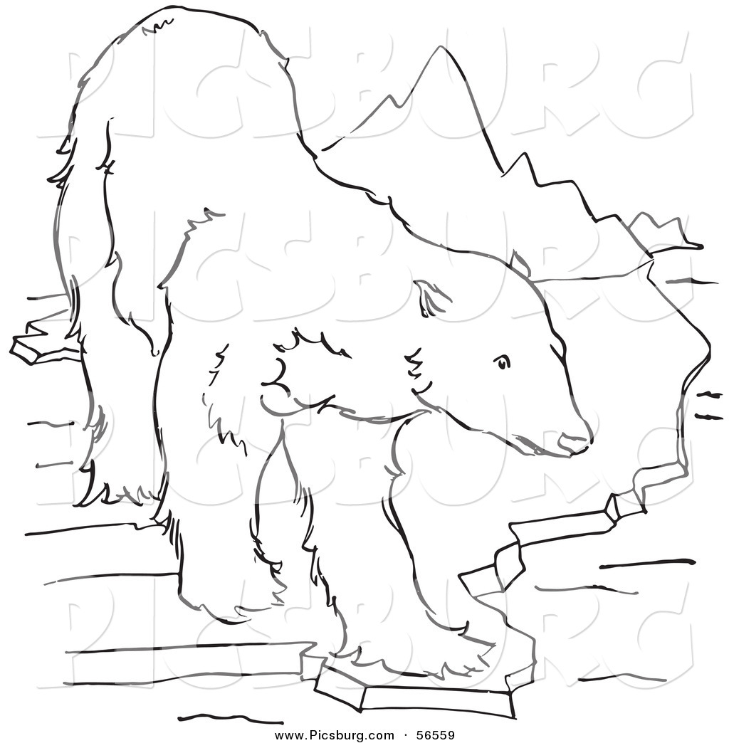 1024x1044 Polar Bear Clipart Line Drawing