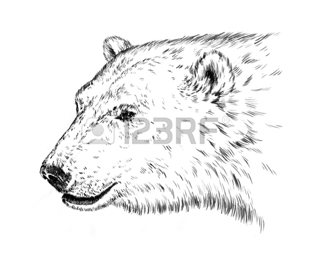 450x378 Black And White Engrave Ink Draw Isolated Polar Bear Stock Photo