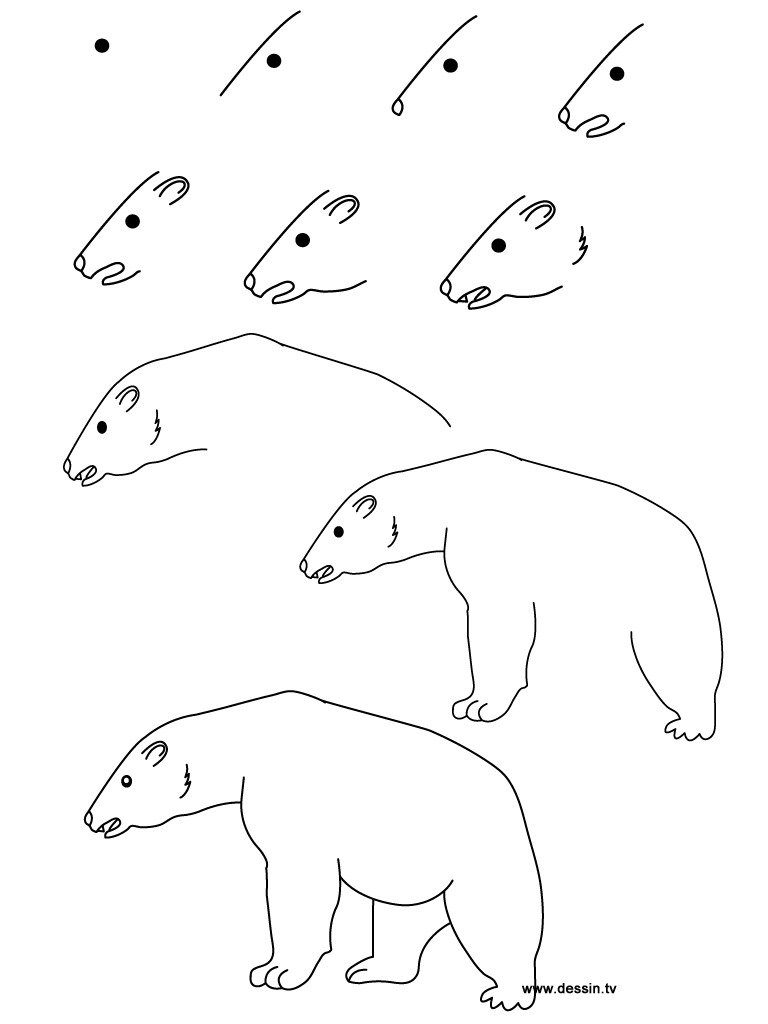 Polar Bear Outline Drawing