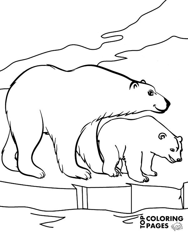 600x740 Coloring Book Polar Bear