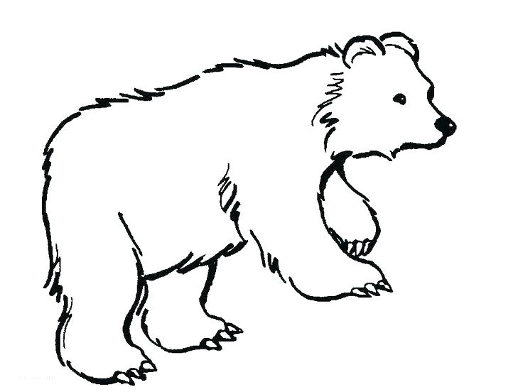 736x552 Polar Bear Coloring Pictures Last Updated Polar Bear Coloring