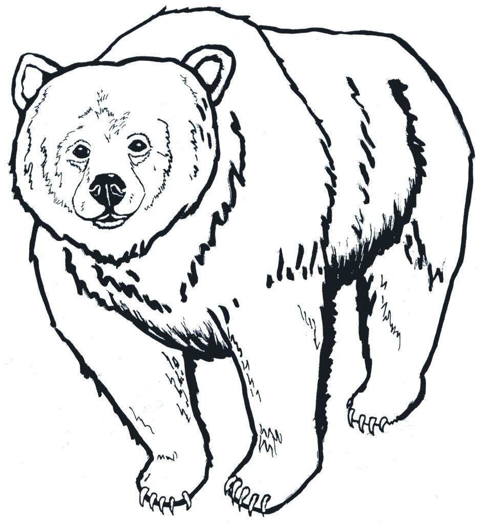 945x1024 Unique Polar Bear Outline 7