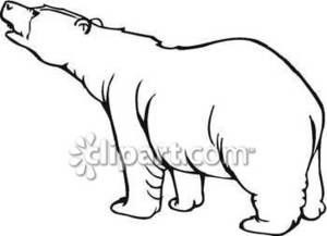 300x217 Of Polar Bear Royalty Free Clipart Picture