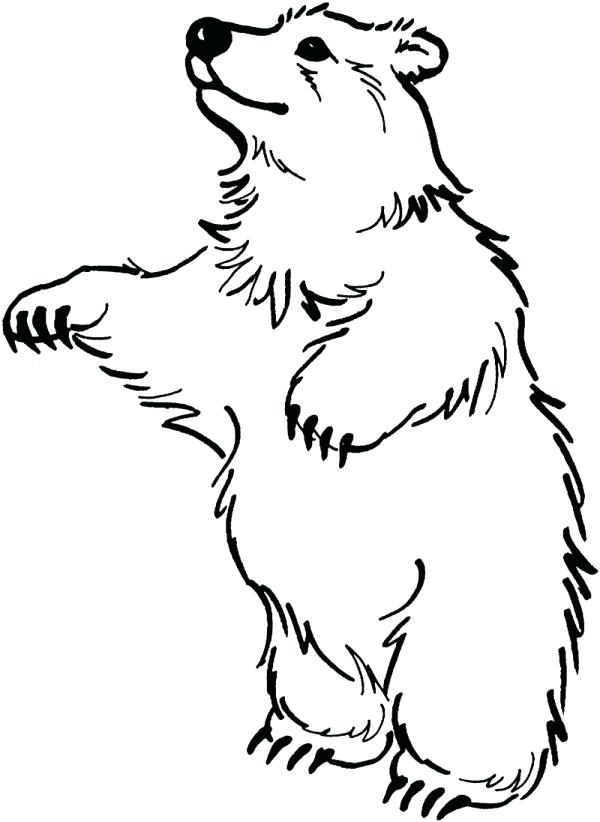 600x822 Black Bear Coloring Pages Of Faces Bear Head Coloring Page