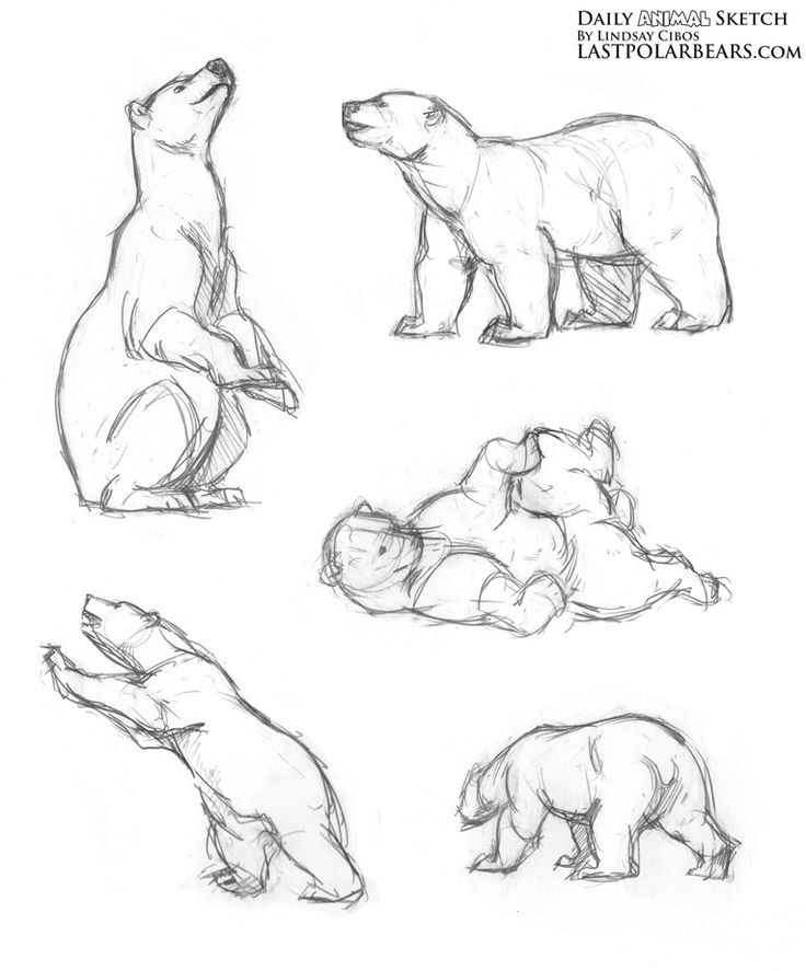 Polar Bears Drawing