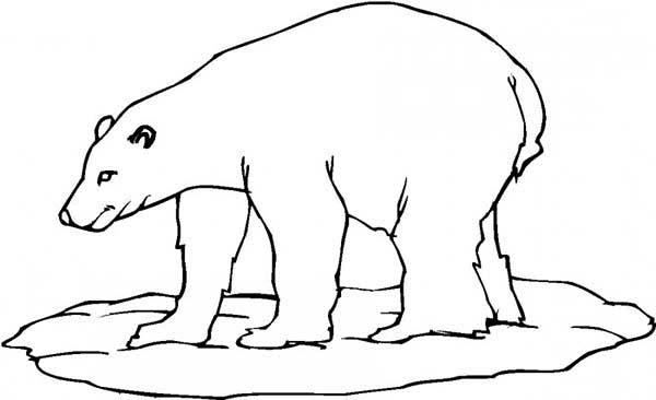 600x366 Polar Bear Coloring Page