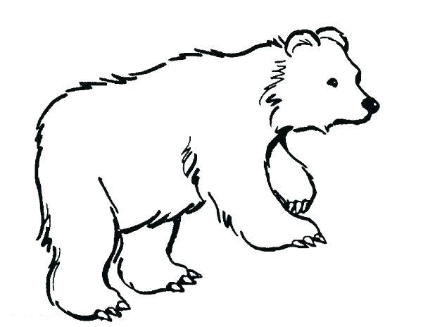 618x464 Polar Bears Coloring Pages Free Printable Polar Bear Coloring