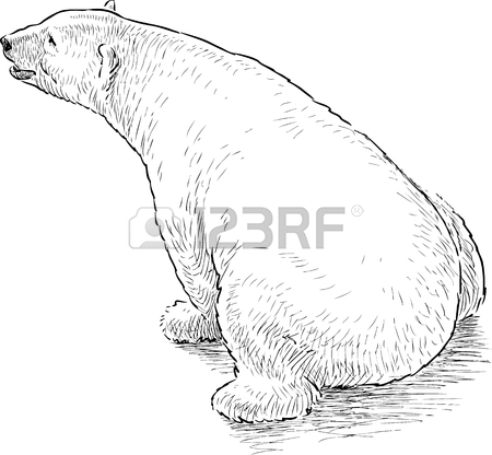 450x416 Sketches Of The Babies Polar Bears Royalty Free Cliparts, Vectors