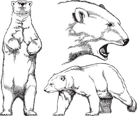 451x384 Bear Standing Clipart