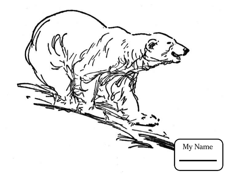 742x570 Mammals Polar Bears Cartoon Polar Bear With Fish Polar Bears