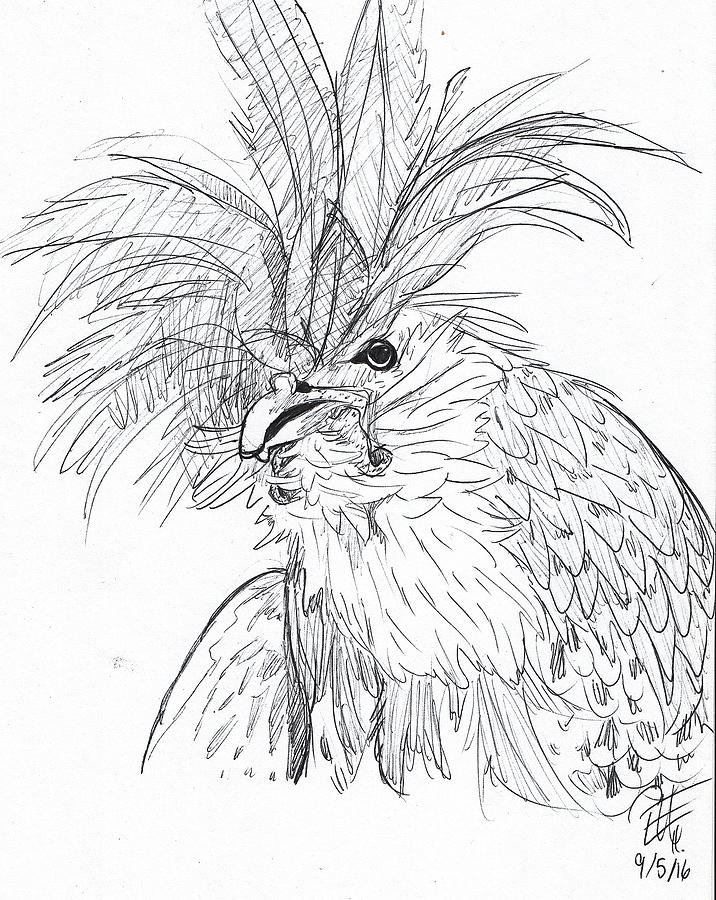 716x900 Rooster Drawing By Eva Helwig