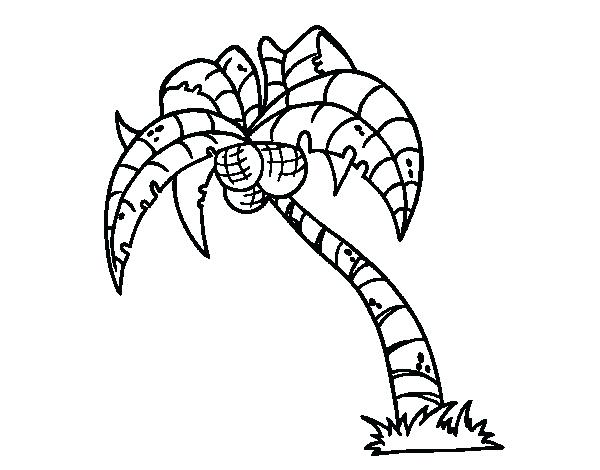 600x470 Palm Tree Coloring Page. Palm Leaf Coloring Page Palm Tree Leaves