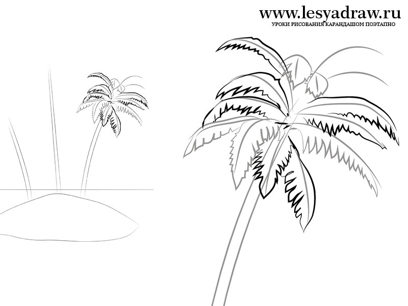 800x600 How Draw Palm Trees. How Draw A Palm Tree Step 7. How