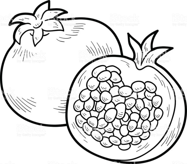 pomegranate drawing at getdrawings com free for personal grenade vector images grenade vector images