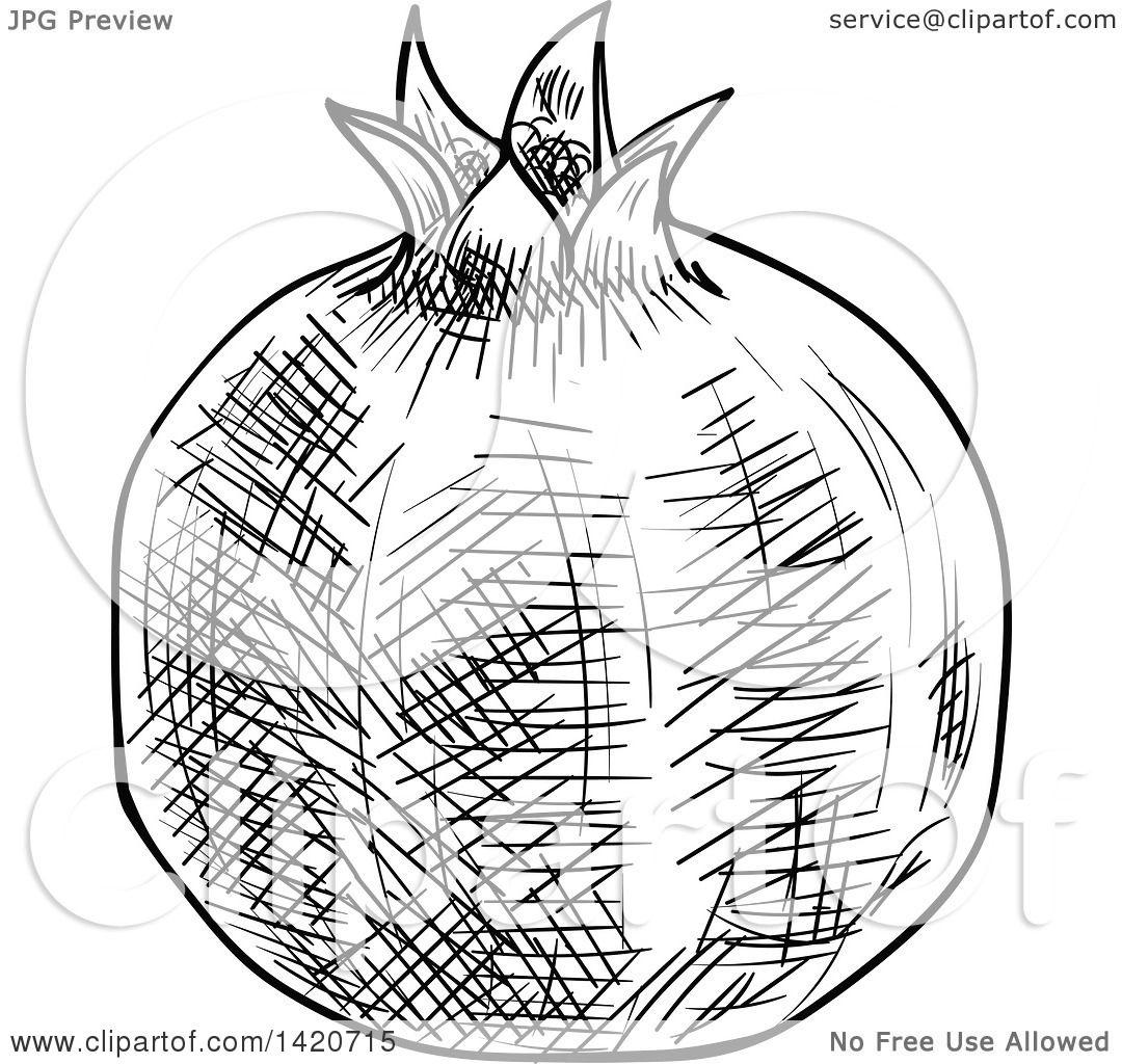 Pomegranate Drawing At Getdrawings