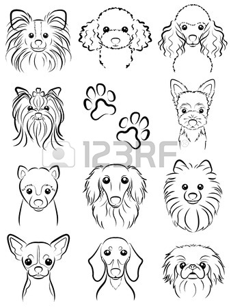 338x450 1,004 Pomeranian Stock Vector Illustration And Royalty Free