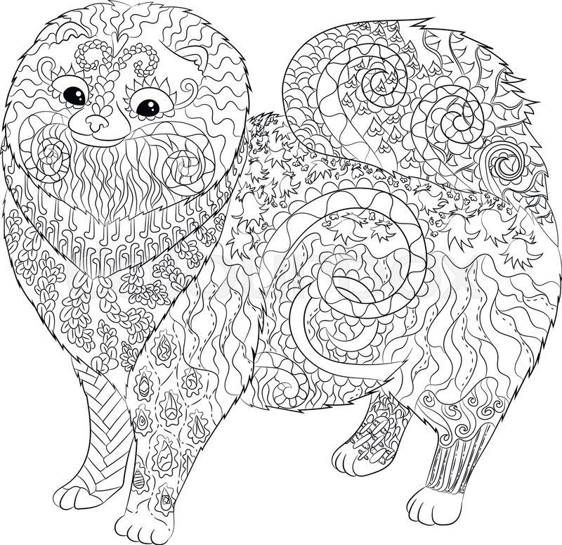 800x775 High Detail Patterned Pomeranian Dog In Zentangle Style. Adult