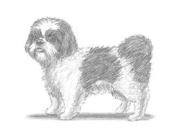 250x193 How To Draw A Dog (Pomeranian)