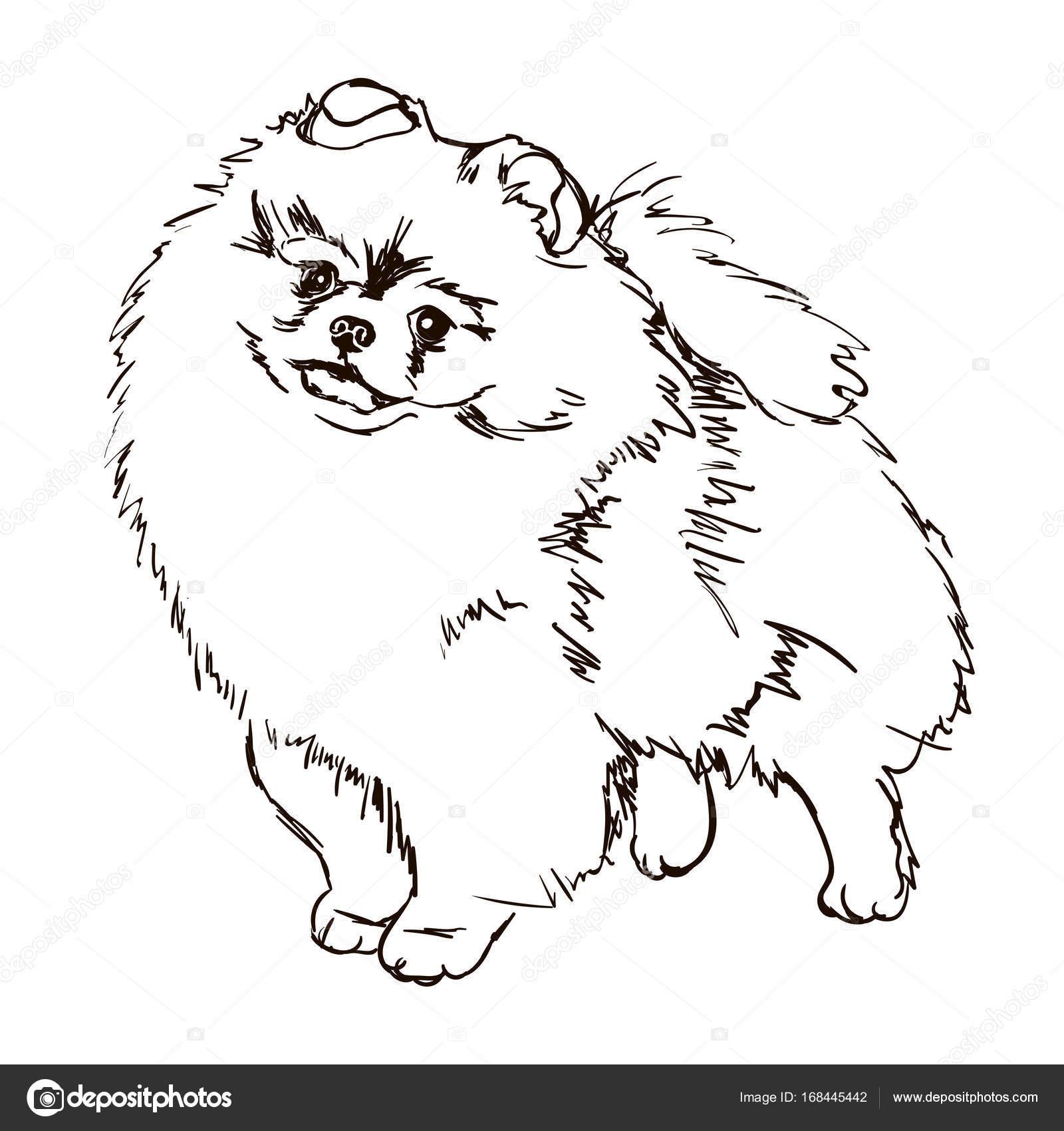 1600x1700 Illustration Of Dog Breed Pomeranian Stock Vector Lizavetas