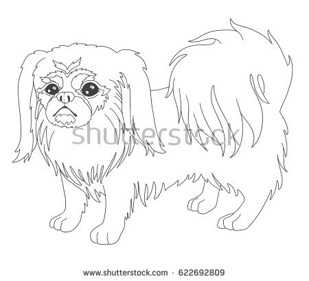 450x410 Pekingese Animal Coloring Pages Pomeranian Coloring Page