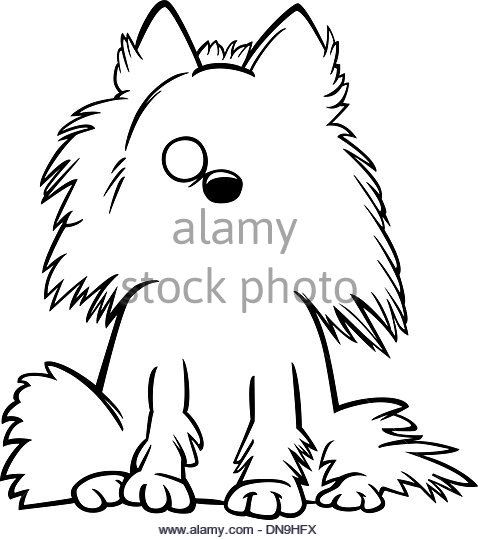 478x540 Pomeranian Black And White Stock Photos Amp Images