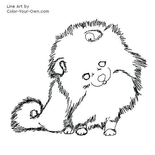 500x500 Pomeranian Coloring Pages For Puppy Pomeranian Coloring Sheets 615