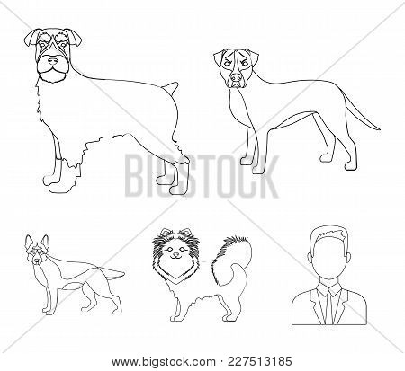 450x413 Pomeranian Images, Illustrations, Vectors