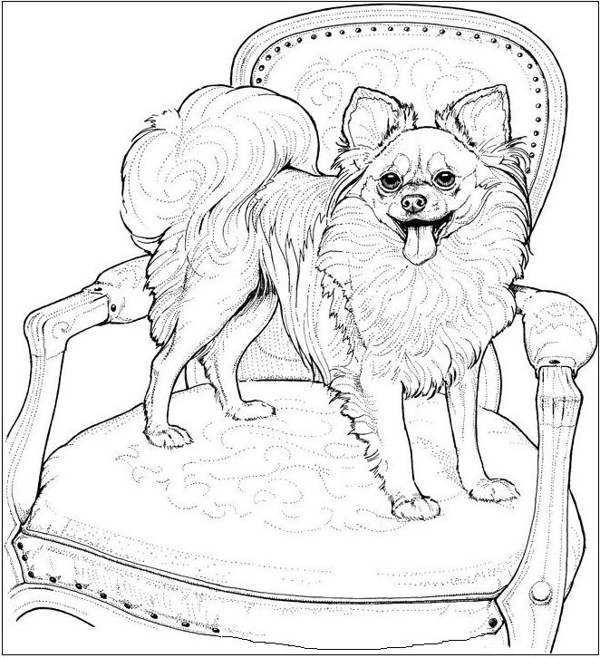 Pomeranian Drawing at GetDrawings.com | Free for personal use ...