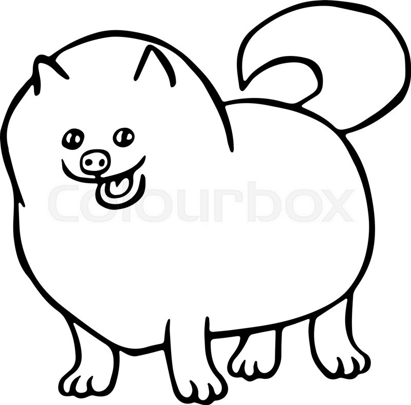 800x789 Pomeranian Spitz Dog. Isolated Vector Illustration. Funny Cartoon