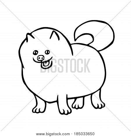 450x470 Pomeranian Spitz Dog. Isolated Vector Amp Photo Bigstock