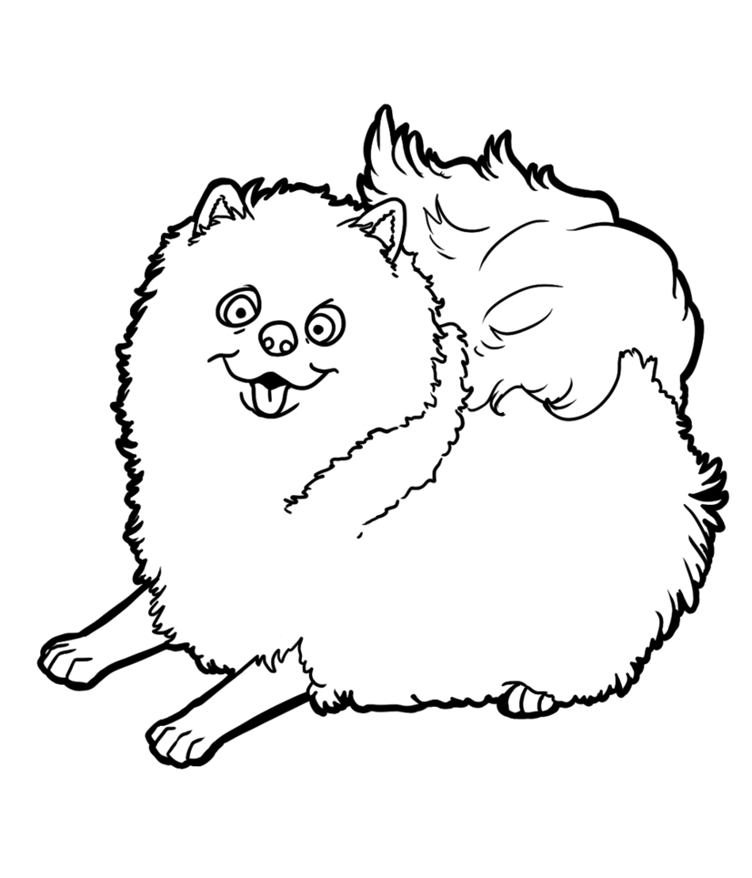 827x965 Pomeranian By Candybeelinearts