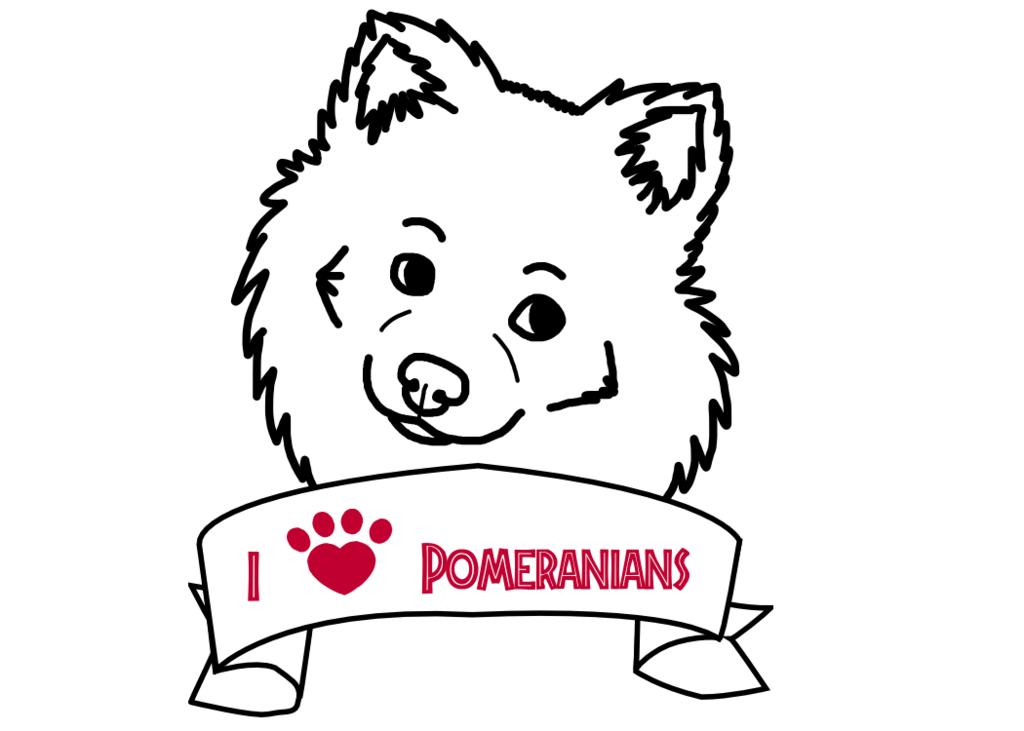 1024x731 Pomeranian By Shelter Staffie