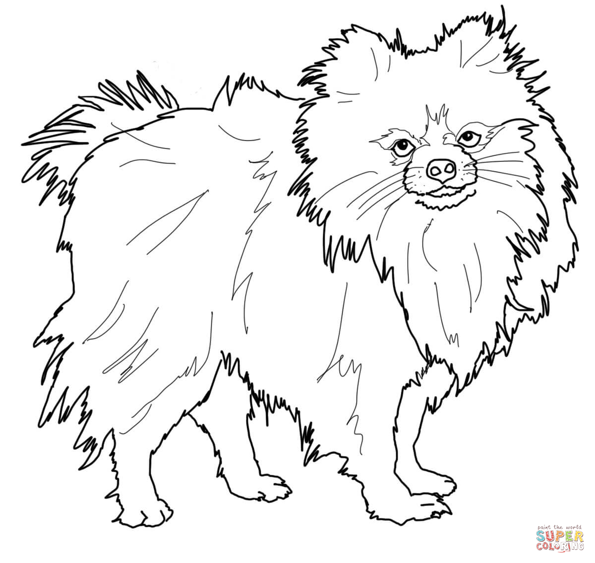 1200x1136 Pomeranian Dog Animal Pet Coloring Page Adult Coloring Pages