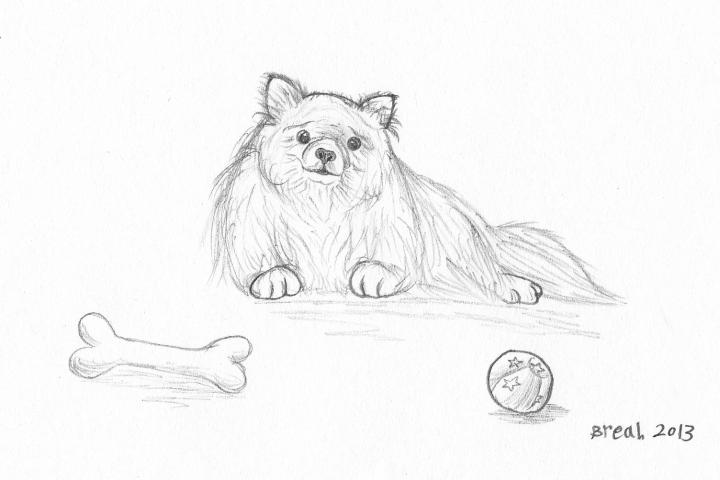 720x480 Pomeranian Dog Sketch Art By Breah