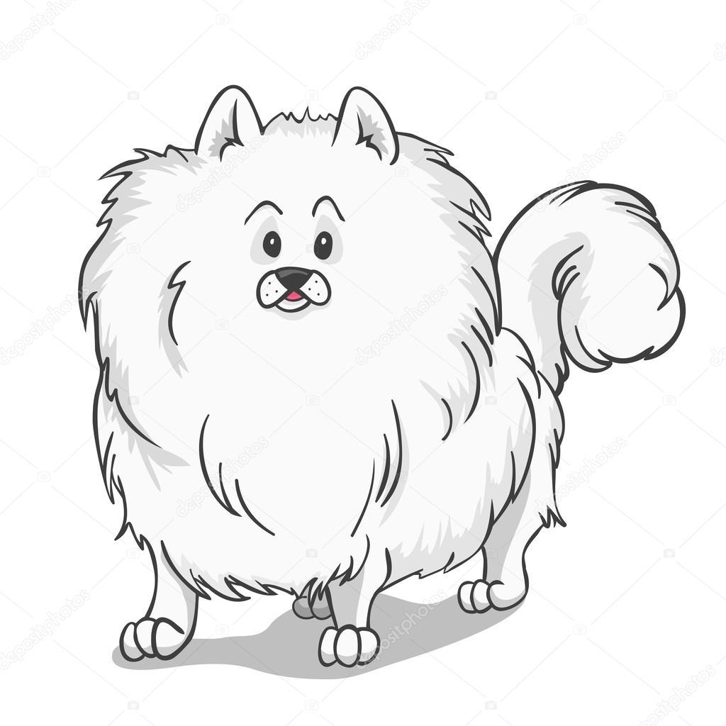 1024x1024 Pomeranian Dog White Stock Vector Dashikka