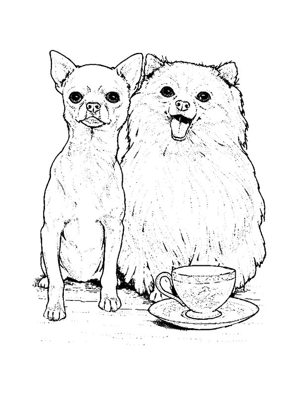 600x800 Chihuahua And Pomeranian Dog Coloring Pages