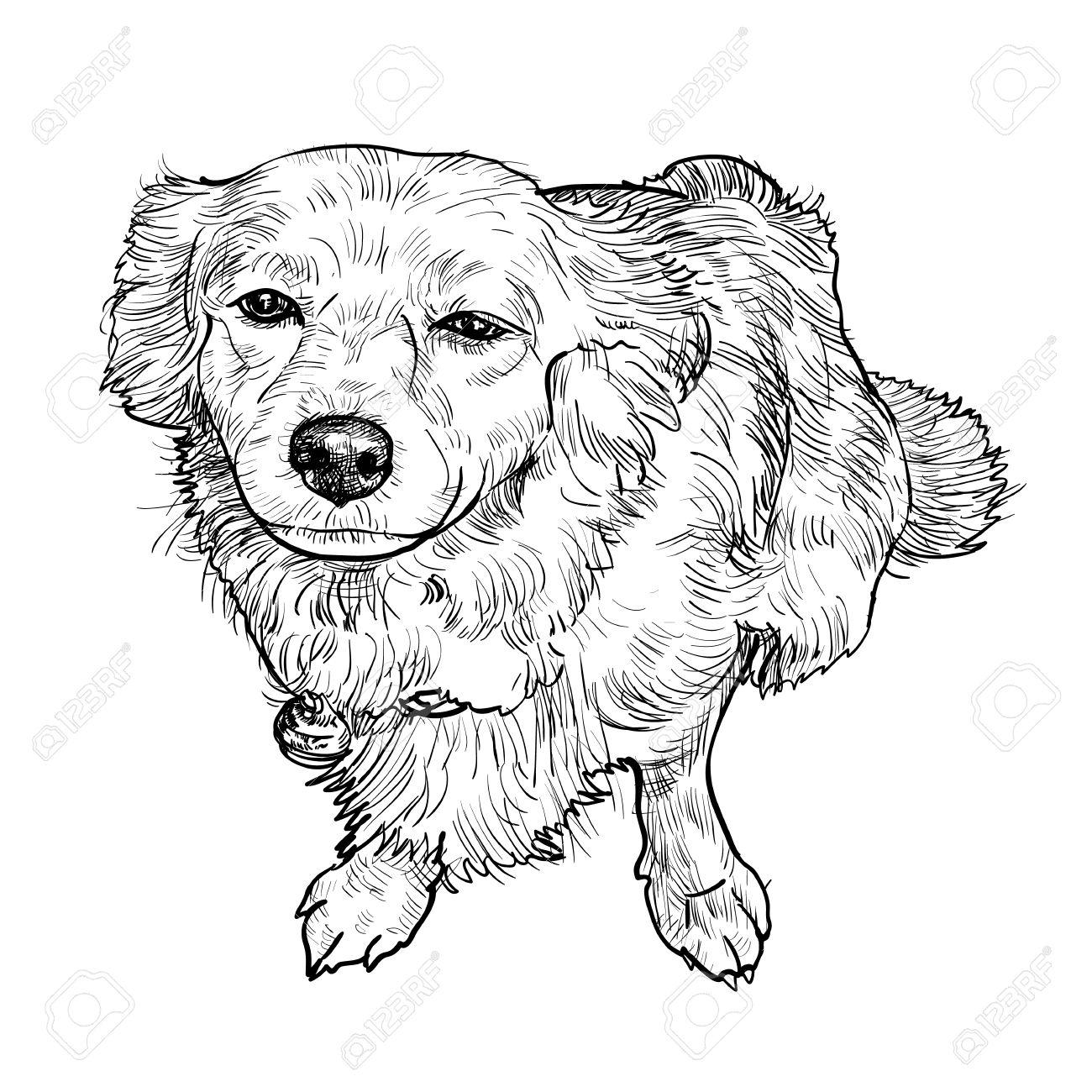 1300x1300 Drawing Of Mix Breeding Pomeranian And Shihtzu Royalty Free