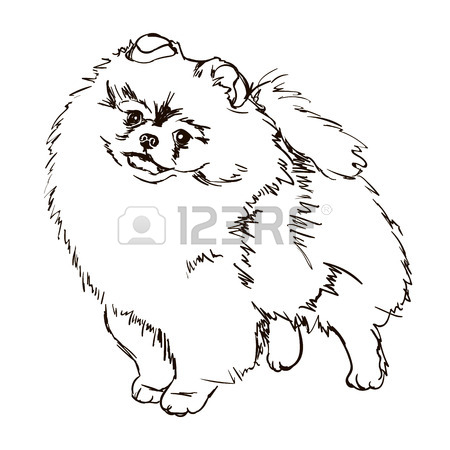 Pomeranian Outline Drawing