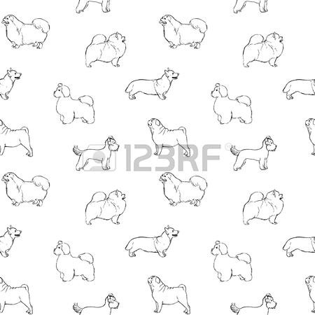 450x450 Pomeranian Line Stock Photos. Royalty Free Pomeranian Line Images