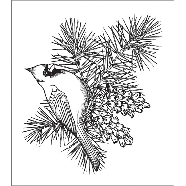 650x650 pine cone coloring pages adults pine cone outline