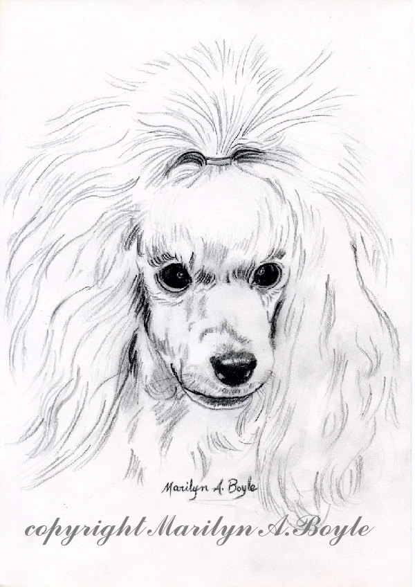 600x848 Print Drawing Poodleart, Pencil Drawing, Miniature Poodle, White