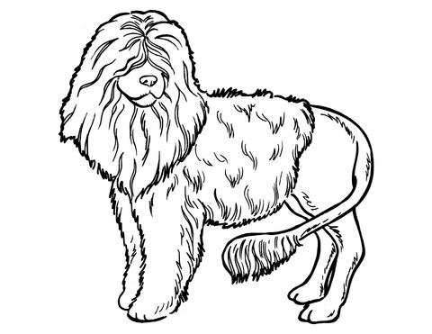 480x371 Poodle Dog Coloring Page Free Printable Coloring Pages