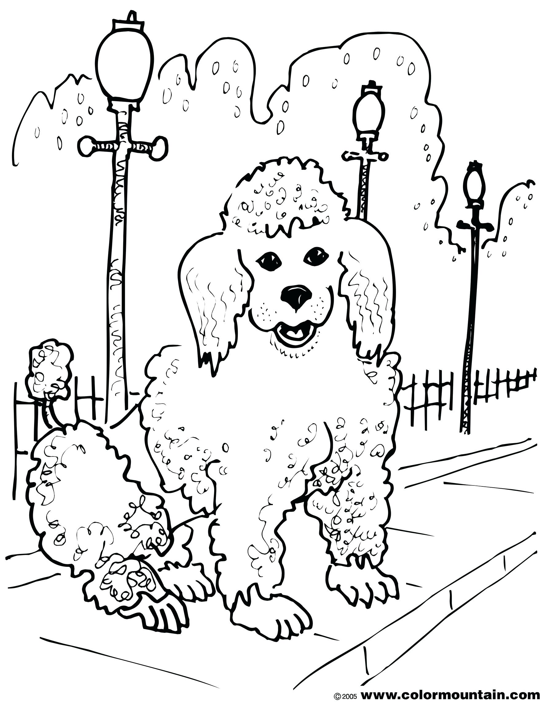 1800x2294 Coloring Poodle Coloring Pages How To Draw A Puppy Step 6. Poodle