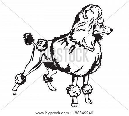 450x405 Decorative Dog Poodle Black White Vector Amp Photo Bigstock