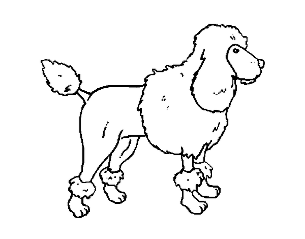 Poodle Line Drawing At Getdrawings Com Free For Personal Use Poodle Cut Out  Pattern 1048x821 Printable