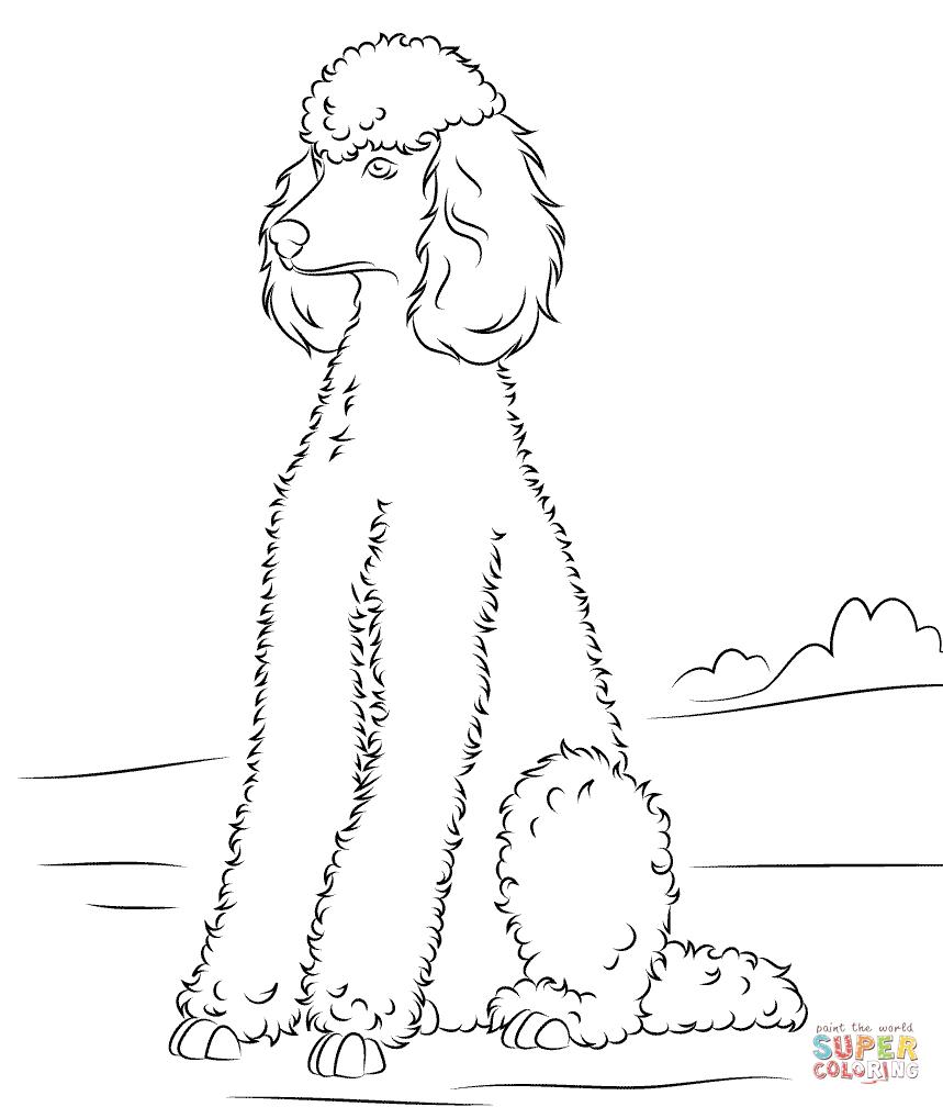 859x1008 Poodle Coloring Pages