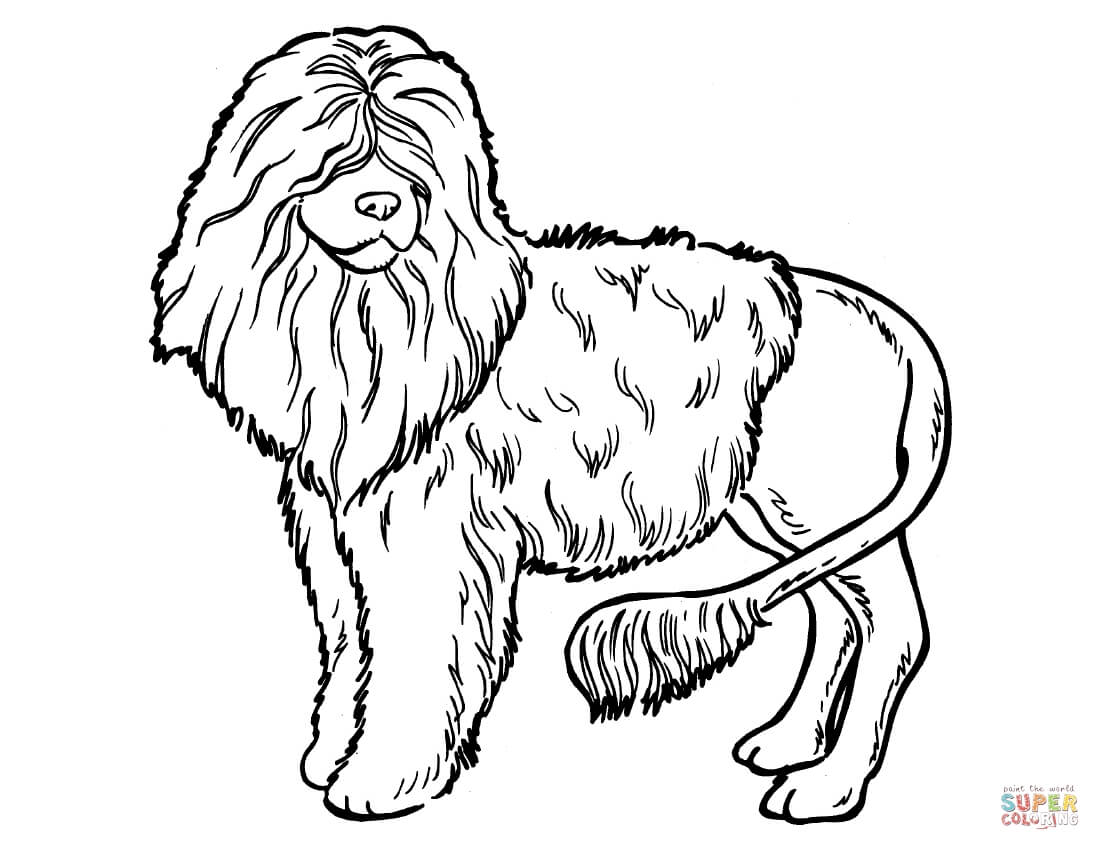 1100x850 Poodle Coloring Pages