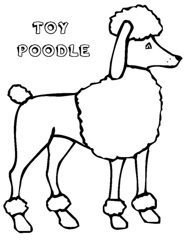 600x788 poodle coloring pages to print